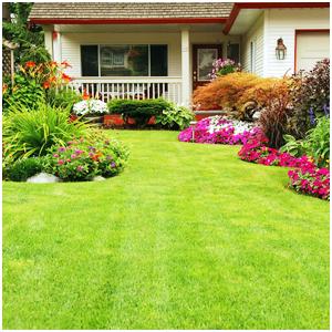 beautiful garden designed